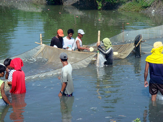 Fish harvesting, Philippines. Photo by Westly R. Rosario, 2006