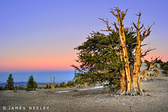 Lone Bristlecone at Sunset (James Neeley) Tags: california sunset landscape hdr bristlecone ancientbristleconepineforest 5xp jamesneeley