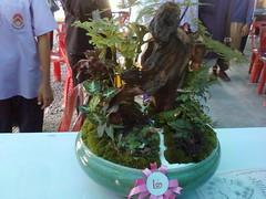 Garden tray002