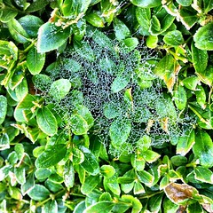 061111_ cobwebs 2