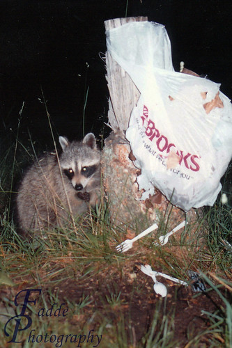 Nature's Masked Bandits