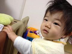 おはよう!起きたてとらちゃん!はじけた髪形(2011/11/8)