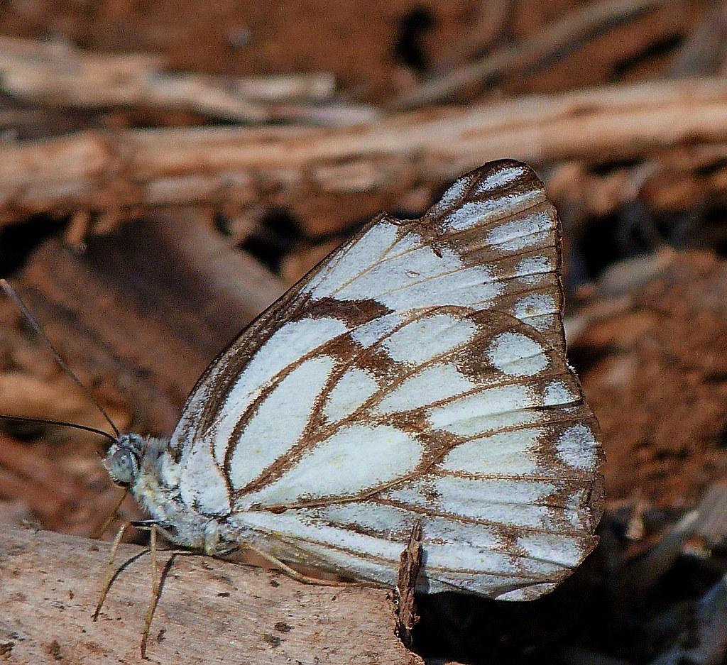 05-11-2011-butterfly