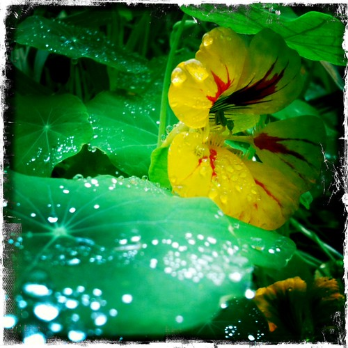 Flower and raindrops