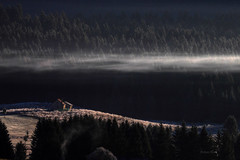 Frozen Time... (Robyn Hooz) Tags: house cold fog alberi canon eos dawn casa woods alba layer stress freddo mattina piana cansiglio 550d alpago ef70300l
