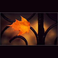 Stuck in Autumn (s a s h i) Tags: autumn nature leaves fence gold textures ealing alexarnaoudov fedupwithleaves masterclasselite