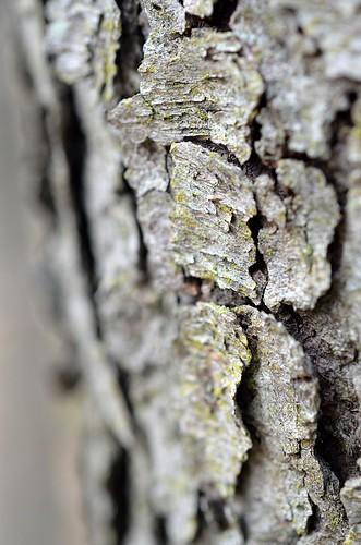 bark texture_216
