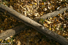 X (ángel mateo) Tags: ángelmartínmateo fondón almería andalucía españa hoja hojassecas otoño marrón amarillo vegetación luz tronco madera palos árboles ángelmateo laalpujarra