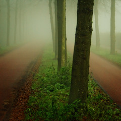 Who's afraid of red, green and fog? (opdrie) Tags: road autumn trees red mist color green nature fog vanishingpoint herbst herfst depth winner500