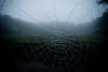 cobweb (Jos Mecklenfeld) Tags: autumn mist fall fog herfst spiderweb cobweb groningen ricoh spinnenweb terapel westerwolde toamnă gx200 pânzădepăianjen ricohgx200