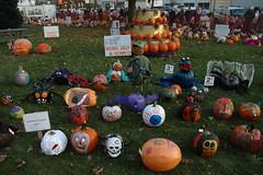 Sycamore Pumpkin Fest 2011 (20)