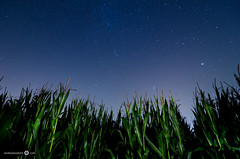 Corn field at night - [EXPLORED] (andreaskoeberl) Tags: longexposure light sky plants field night dark stars austria feldkirch corn nikon shadows wideangle illuminated flashlight milkyway ultrawideangle d7000 tokina1116 didnotfire nikond7000 exifoff andreaskoeberl