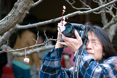 Ume is serious business (Otomodachi) Tags: flowers japan temple march kyoto funny photographer serious blossom professional ume bloesem bloemen 2012 tempel maart leuk grappig bloemetjes fotograaf serieus zuishinin pruimenbloesem profesioneel suishinin