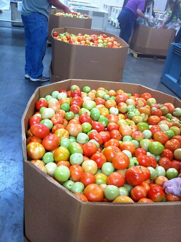 Donated tomatoes