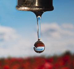 All in a drip (Nikonsnapper) Tags: sky water nikon drop drip poppies refraction gota tamron 90mm macrop f64 explore26 277365 d300s game38 thepinnaclehof project36612011 f64g38r1win tphofweek122