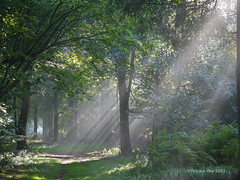 (yvonnepay615) Tags: uk nature woodland lumix woods ngc norfolk panasonic g1 rays 45mm eastanglia autofocus lynford flickraward platinumheartaward flickraward5 onlythebestofnature flickrawardgallery artistoftheyearlevel2 masterclasselite