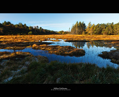 Autumn - Fields of gold (Hkon Kjllmoen, Norway) Tags: mygearandme mygearandmepremium mygearandmebronze mygearandmesilver mygearandmegold mygearandmeplatinum mygearandmediamond
