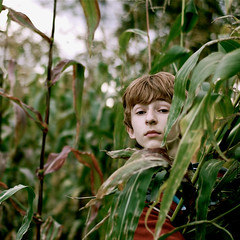 louis in the corn (Daniela Klara R. (gone)) Tags: autumn boy newyork green fall square corn harvest orchard bsquare prospecthillsorchard