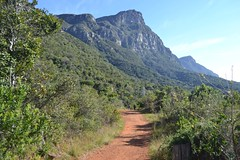 View towards Devil's peak from upper Kirstenbosch Photo