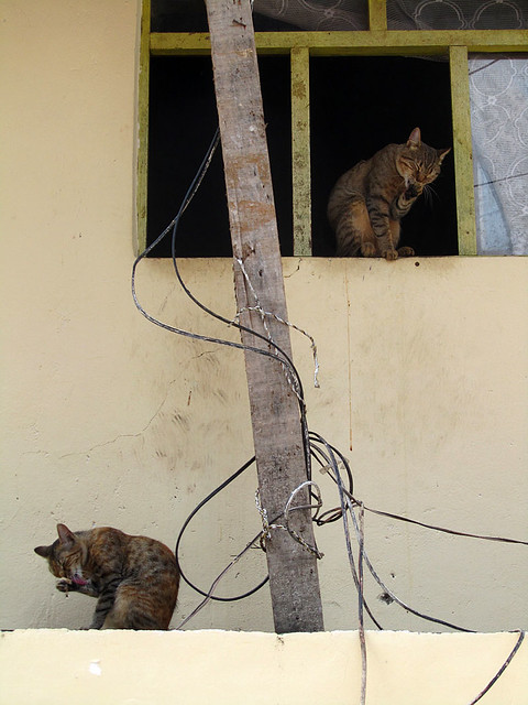 Cats in Aguas Calientes