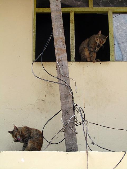 Cats in Aguas Calientes