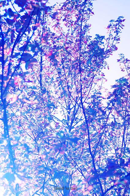 植物--秋天的速寫