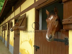 Cocheira (Edson Grandisoli. Natureza e mais...) Tags: animal gua cavalo corrida criao jquei cocheira vertebrado