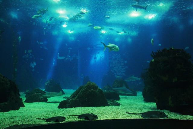 Oceanarium w Lizbonie