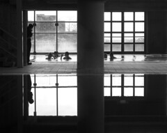squares (estella7272) Tags: bw reflection geometric swimming piscina bn sicily acqua riflessi catania sicilia geometrie terapia terapy