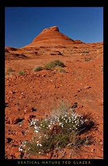 Leftover Bloom (Ted Glazer: Vertical Nature Photography) Tags: arizona utah redrocks lakepowell tedglazer verticalnature