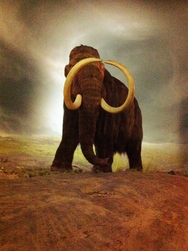 Woolly mammoth at the Royal BC Museum