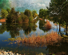 Canon 5D Heritage Pond 0863 (Del Hoffman-Thx 11,851,000 Views) Tags: painterly calm dreamy ponds herons