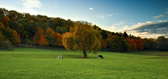 the coloured season (m.budde) Tags: autumn light sky sun colour tree clouds forest pen wonderful lumix cow olympus aachen 20mm epl1 mygearandme musictomyeyeslevel1 flickrstruereflection1