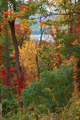 colors (Jeny's flickr page) Tags: new york autumn fall colors leaves hojas finger lakes otono