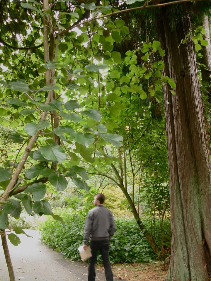 ubc botanical garden 002