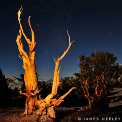 Ancient Bristlecone (James Neeley) Tags: california nightphotography lightpainting landscape bristlecone f12 lowlightphotography ancientbristleconepineforest jamesneeley
