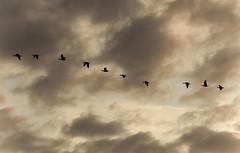 Bird Line (Chris Willis 10) Tags: birds wildlife hide twitchy twitchers martinmere peoplewatchingwasgreat