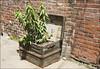 Ruelle verte No 2 (• CHRISTIAN •) Tags: plant green 35mm plante alley nikon backalley treasure montréal chest vert ruelle plateaumontroyal trésor malle coffre mtlguessed d80 gwim