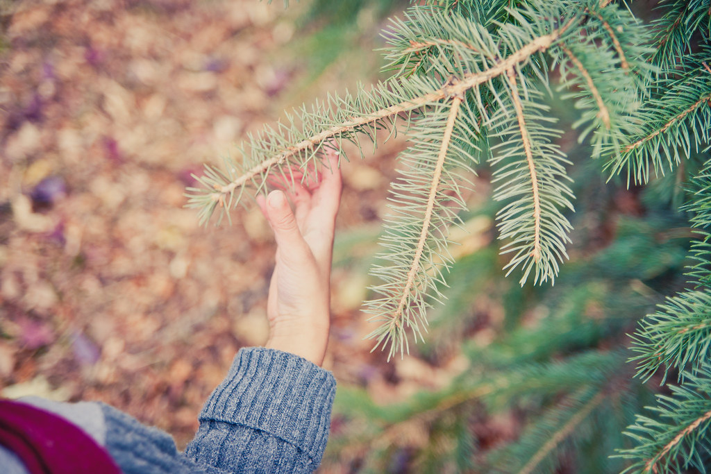 {Christmas} Tree
