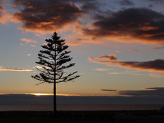 Sunday morning (Home Land & Sea) Tags: newzealand sky beach silhouette clouds sunrise nz napier norfolkpine sonycybershot hawkesbay marineparade homelandsea dschx100v