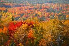 Autumn palette (Johan_Leiden) Tags: autumn fall colours newengland newhampshire franconia foliage