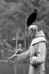 São Francisco (Thiago Souto) Tags: sanfrancisco parque brazil bw white black bird animal statue branco brasil fauna zoo sãopaulo sony pássaro pb preto sp ave zoológico vulture alpha creature bicho blackvulture coragypsatratus estátua corvo urubu sãofrancisco α criatura a230 zoológicodesãopaulo sanfrancis protetordosanimais urubupreto empoleirado urubucomum α230 águafunda apitã urubdacabeçapreta