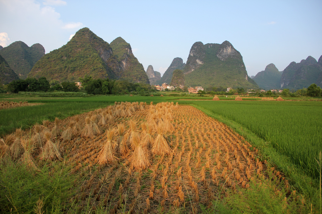Rice Fields in Yangshuo, China