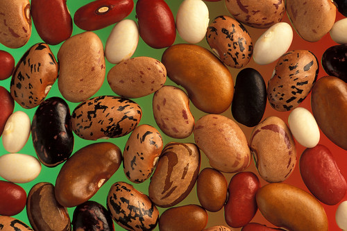 The USDA-supported Bean Coordinated Agricultural Project (BeanCAP) is working to help bean plant breeders develop new varieties that are better at adapting to changes in climate.