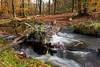 Dutch Autumn-3 (DolliaSH) Tags: autumn holland fall colors creek canon beek herfst nederland thenetherlands 7d 1022mm veluwe gelderland kleuren canonefs1022mmf3545usm canoneos7d dollia sheombar dolliash