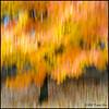 ... (qixtepr) Tags: red orange abstract blur tree fall leaves yellow yard square flickr cameramotion utatathursdaywalk utatafeature colorphotoaward utata:project=tw290 ©davidgoss bsquarecdistortion