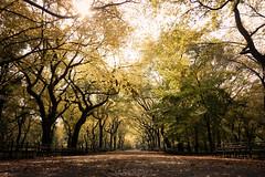 Fall on the Mall (Gamy Wong (ASQUALL)) Tags: nyc newyorkcity autumn trees fall mall centralpark foliage