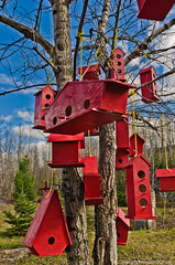 The McDo Town (Still-Free) Tags: blue red sky house canada bird art clouds nikon quebec birdhouse mcdonalds mcdo d7000