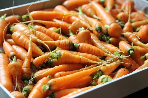 Carrot Haul