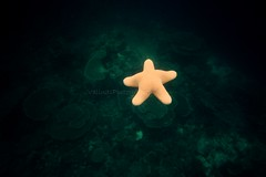 Morbida e delicata (Valina's Photography) Tags: holiday star sand travels nuvole mare rosa natura snorkeling cielo sole maldives viaggi spiaggia vacanza paradiso sabbia maldive stellamarina gioiaresort kihaadatollodibaa